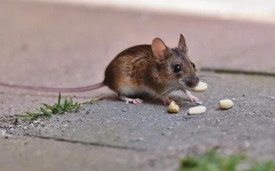 Comment repousser les animaux nuisibles ?